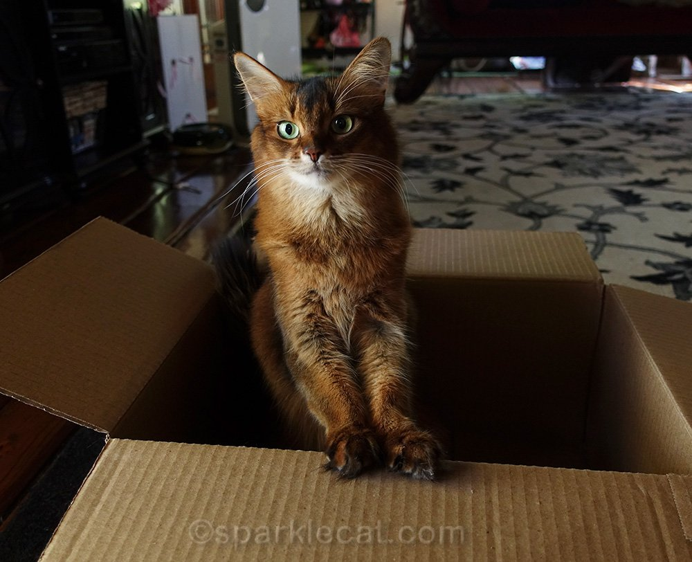 Summer finds an interesting study that explains why shelter cats need boxes - and explains why she doesn't.