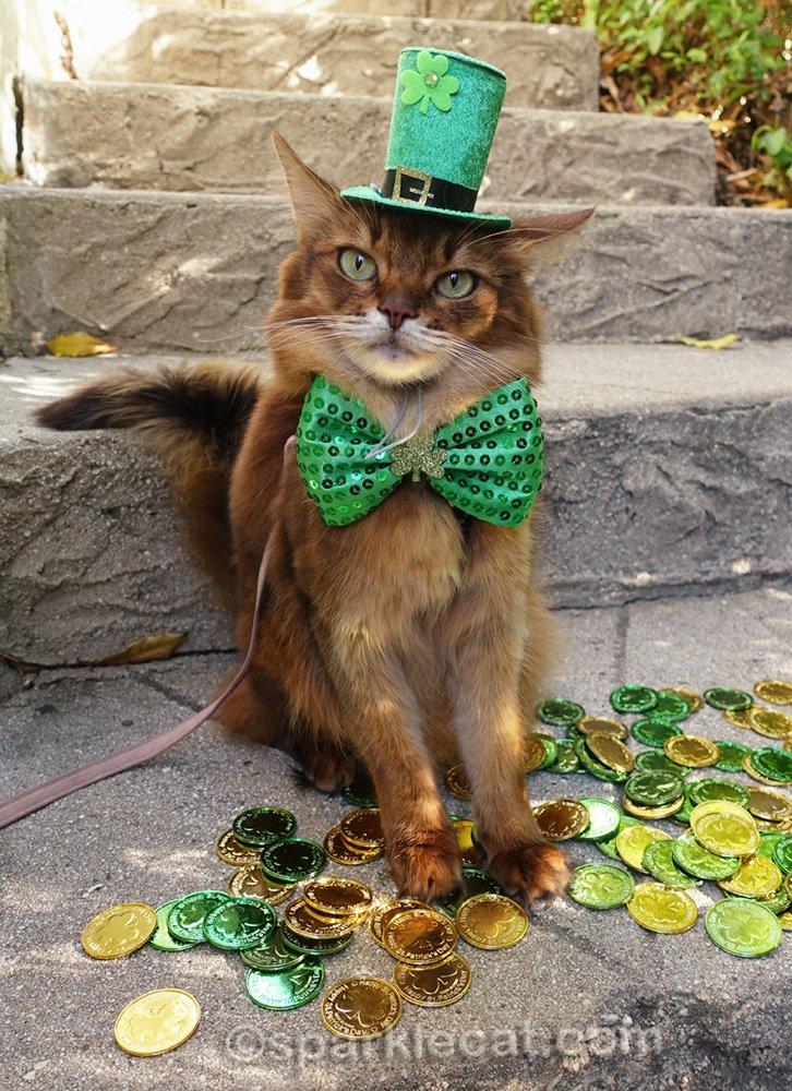somali cat dressed as leprechaun