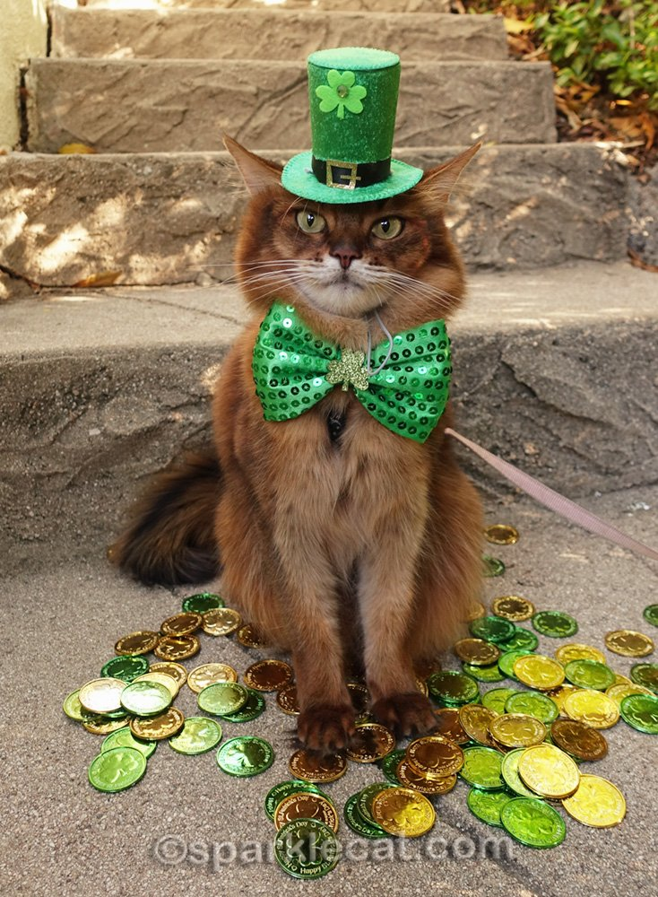 somali cat posing in a St. Patrick's Day photo session