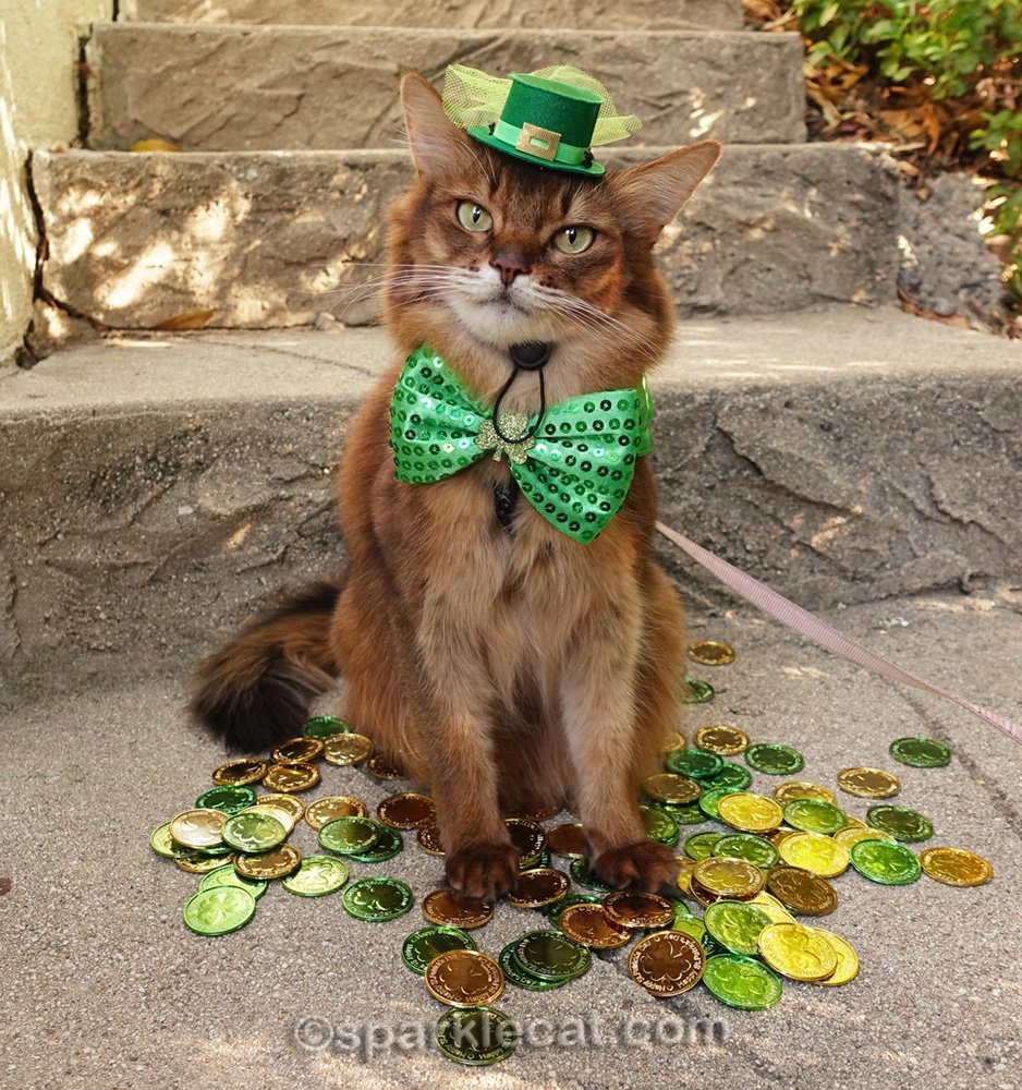 somali cat wearing a different St. Patrick's Day hat