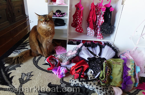 Caturday Cat Clothes Conundrum | SparkleCat