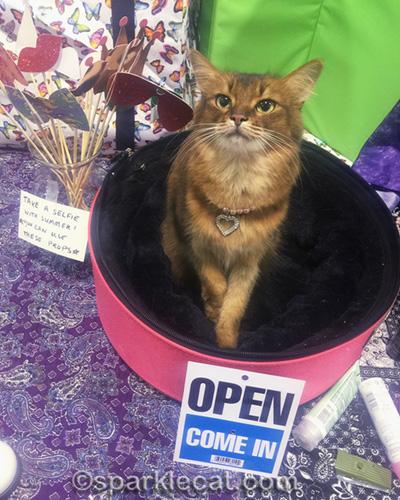 somali cat in sleepypod at cat show