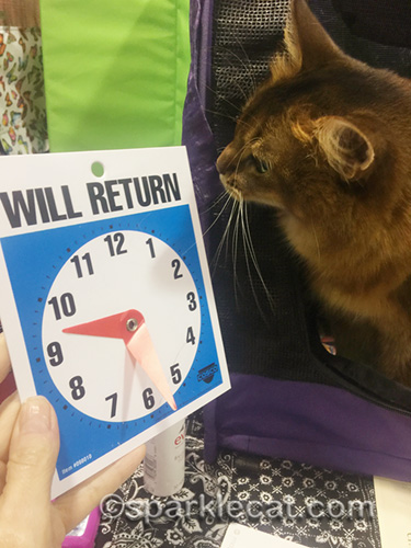 somali cat saddened by bent will return clock