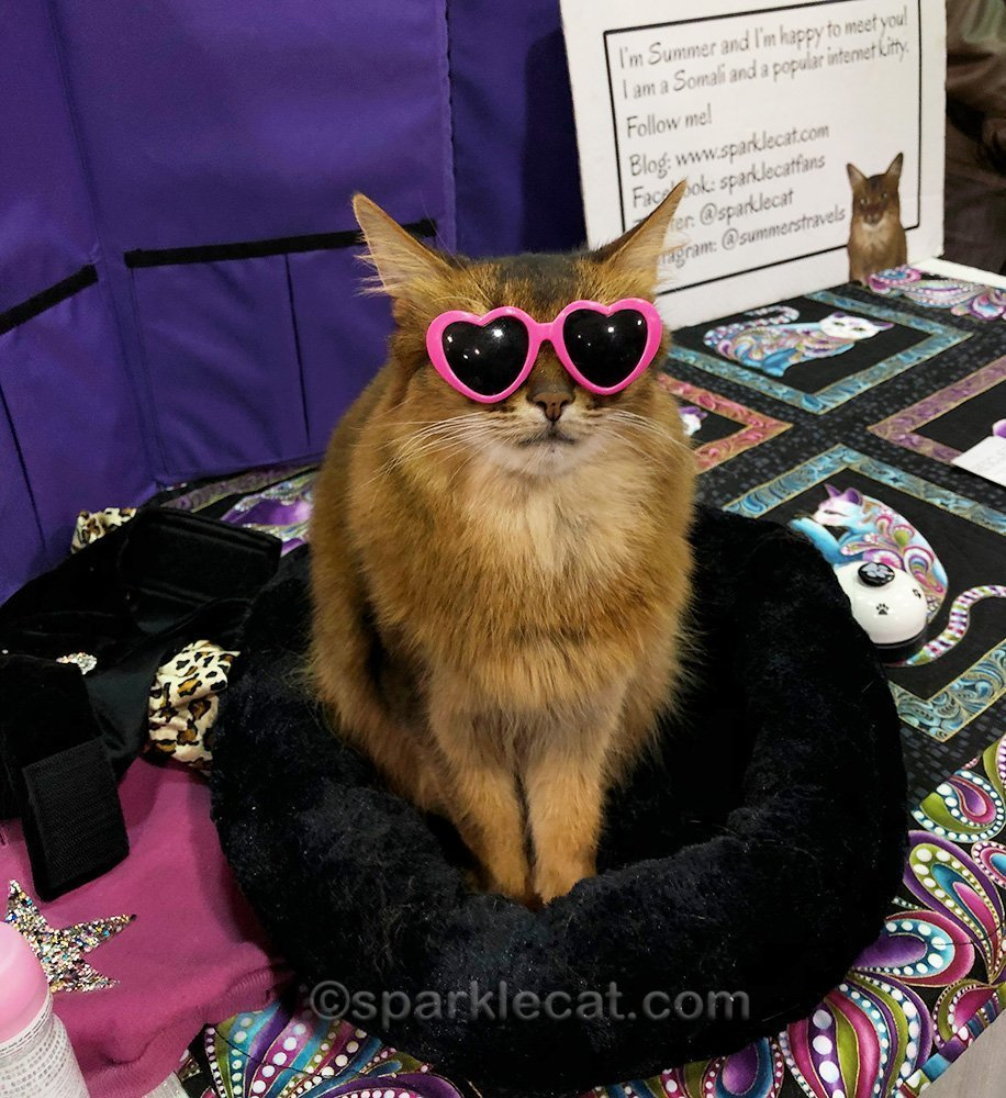 somali cat wearing pink heart shaped sunglasses