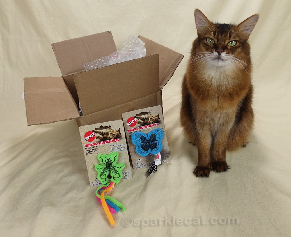 somali cat with a pair of cat toys