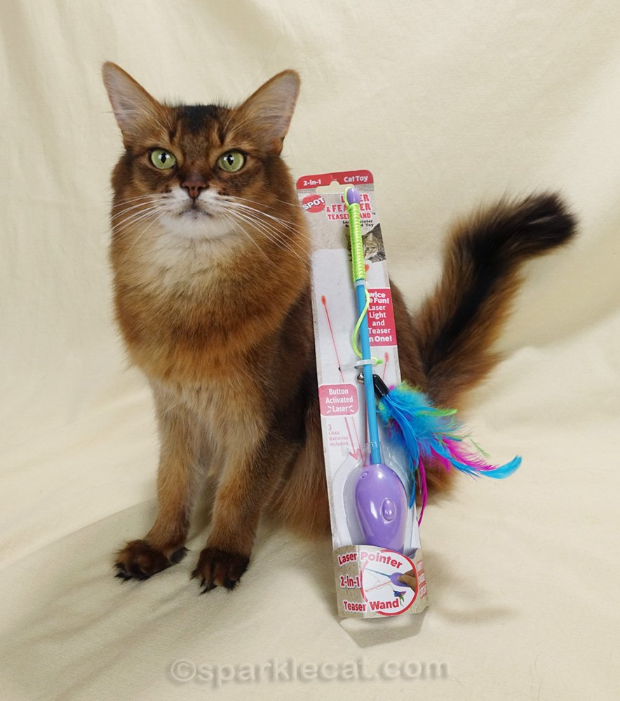 somali cat posing with laser and feather wand