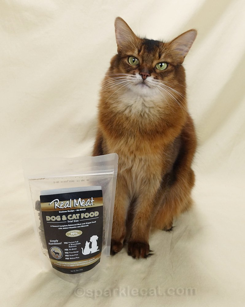 somali cat posing with air-dried venison food
