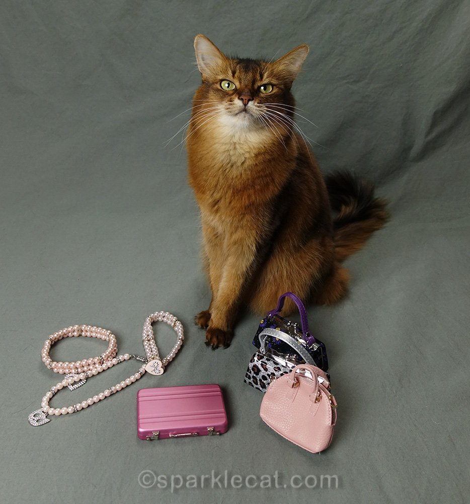 somali cat showing how to accessorize