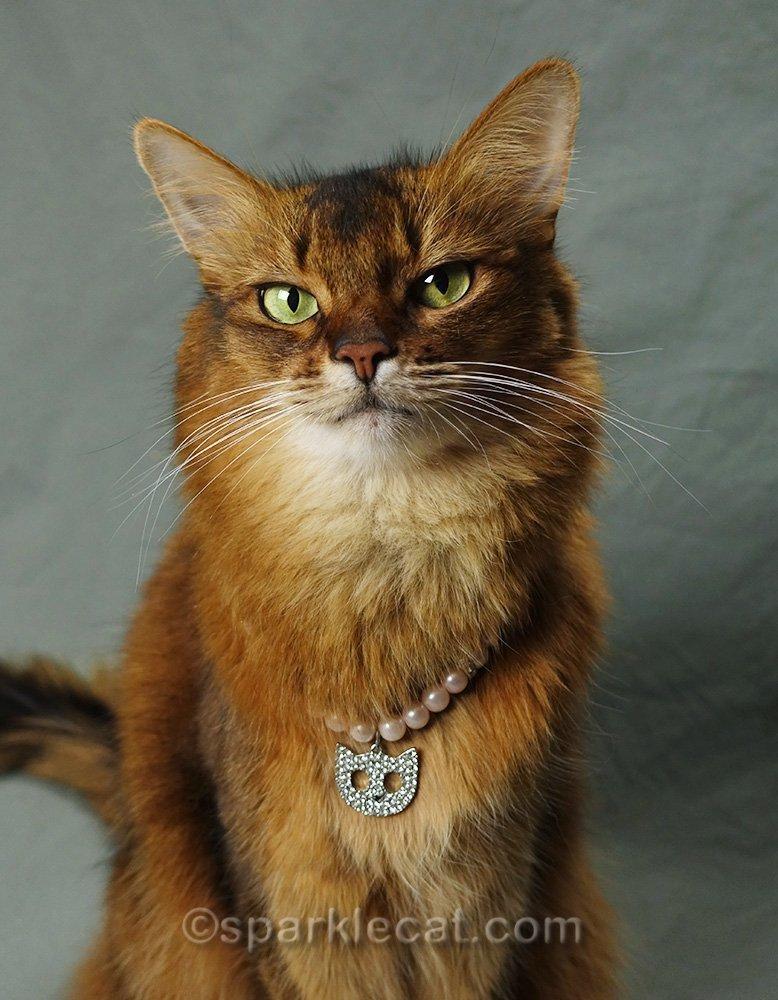 somali cat wearing rhinestone cat necklace
