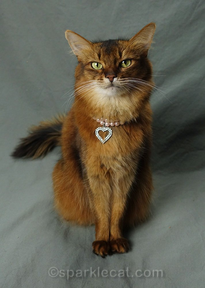 Somali cat wearing pink pearl necklace with rhinestone heart