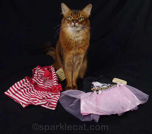 somali cat with two dresses to wear