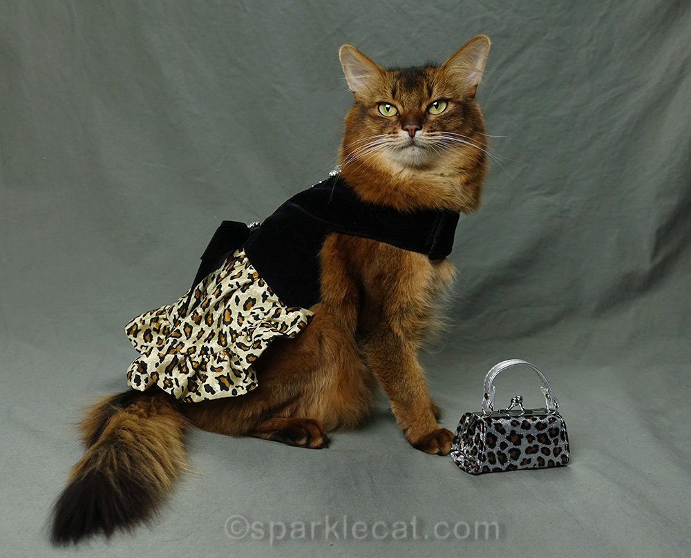 somali cat in leopard print dress with leopard print bag