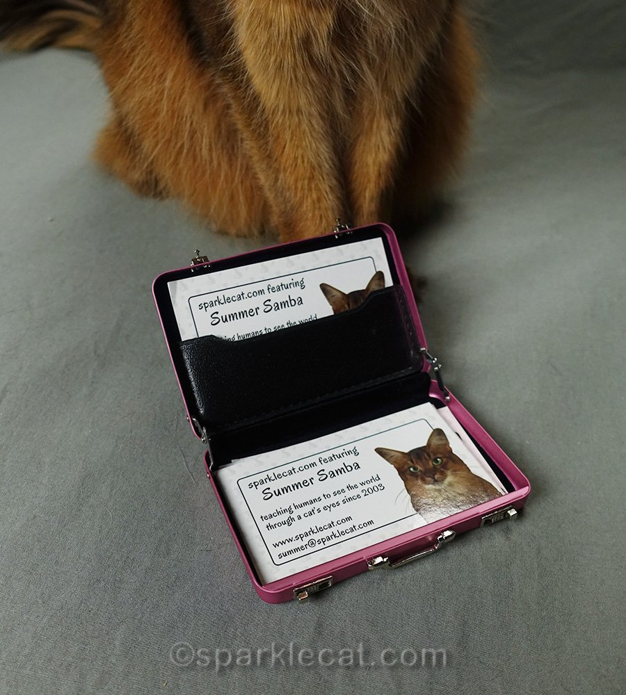 somali cat business cards in tiny pink briefcase