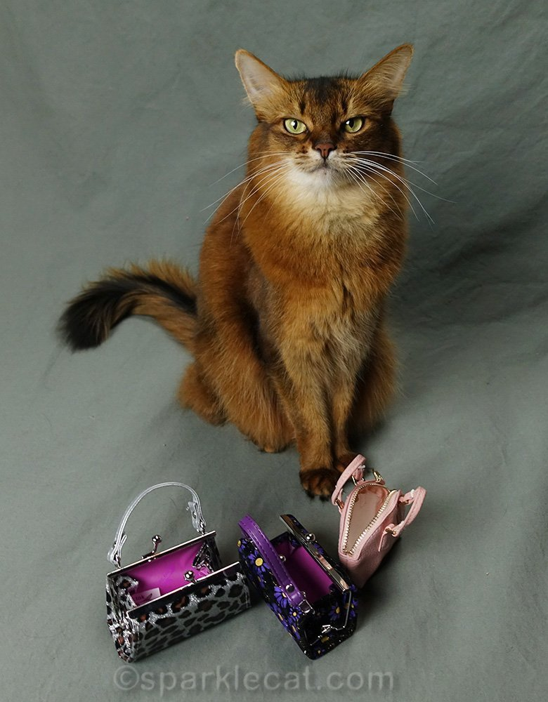 somali cat with empty purses