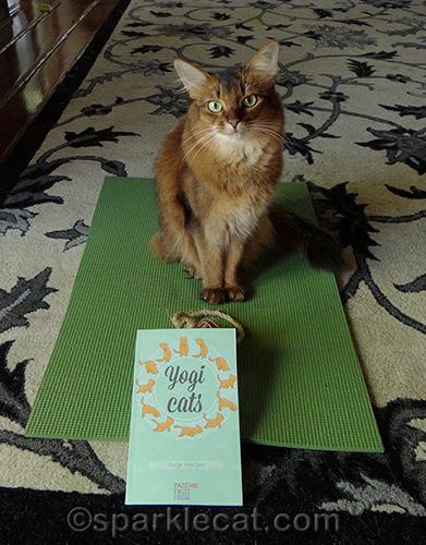 somali cat posing with feline yogi mat and yogi cats book