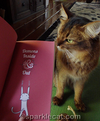 somali cat posing with chapter from Yogi Cats