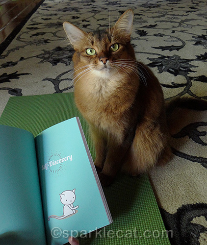 somali cat posing with chapter from Yogi Cats book