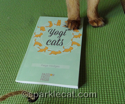 somali cat paw on a copy of Yogi Cats