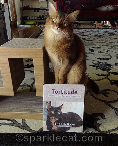 somali cat poses with Tortitude book