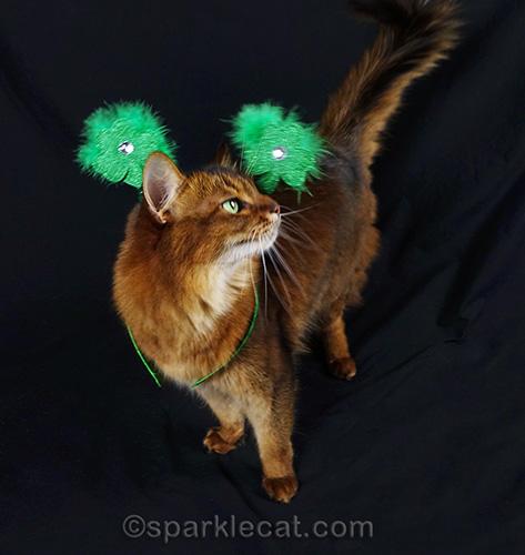 somali cat wearing a St. Patrick's Day headband
