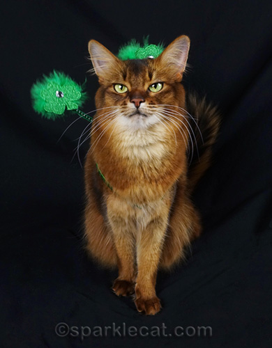 somali cat not thrilled with St. Patrick's Day headband
