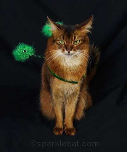 somali cat with airplane ears wearing St. Patrick's Day headband
