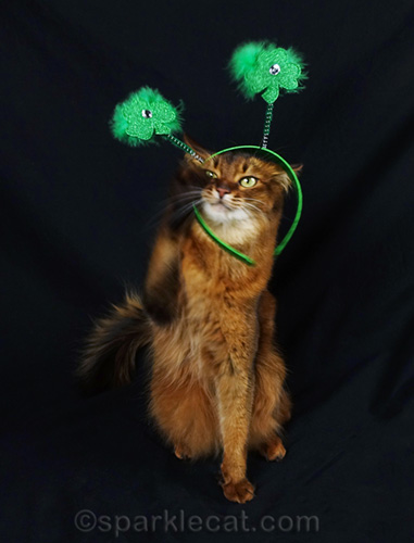somali cat trying to adjust st. patrick's day headband