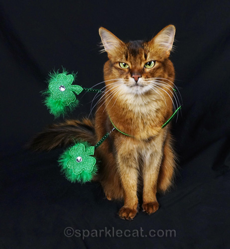 frustrated somali cat with St. Patrick's Day headband