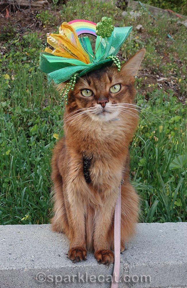 somali cat wearing St. Patrick's hat