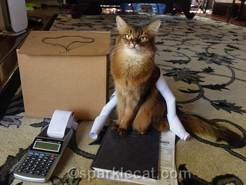 somali cat with calculator tape and tax paperwork