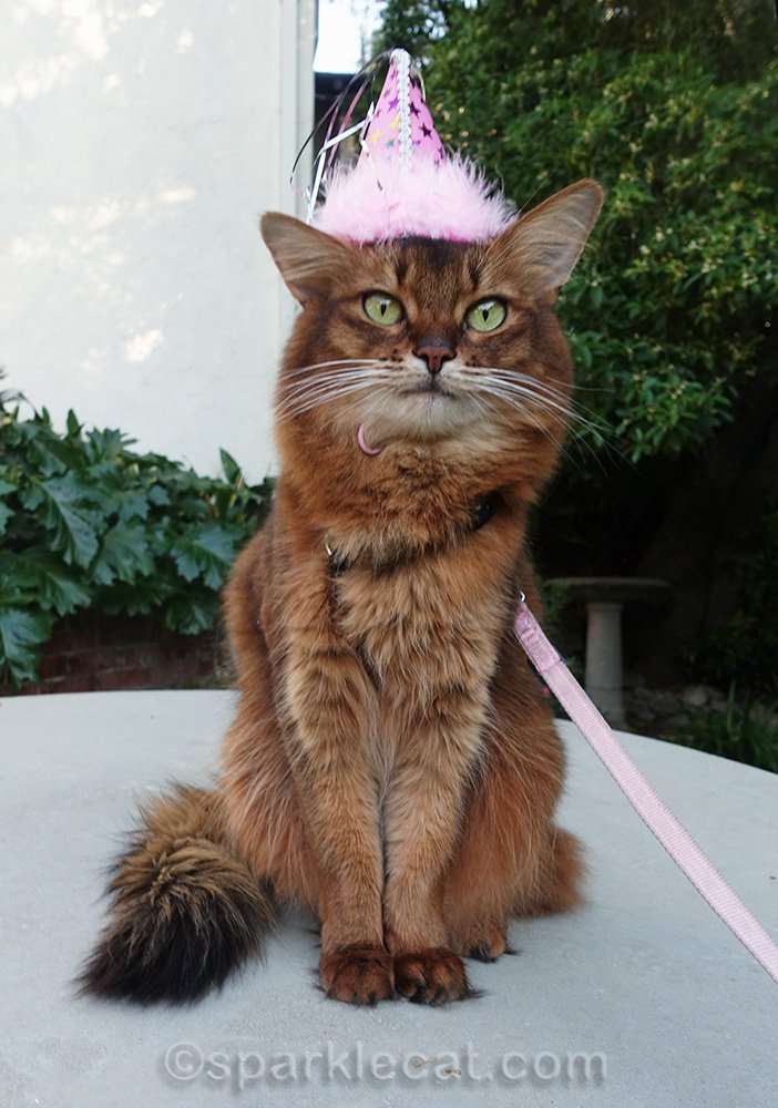 Summer hears about a shelter cat in the U.K. that nobody came to her birthday party! And wants to help her find a home.