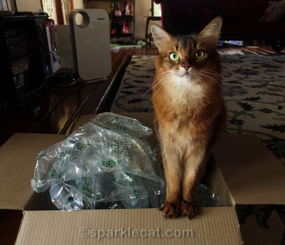 somali cat dissatisfied with contents of Amazon Prime delivery box