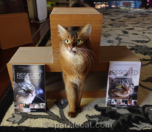 somali cat with tongue out and cat rescue books