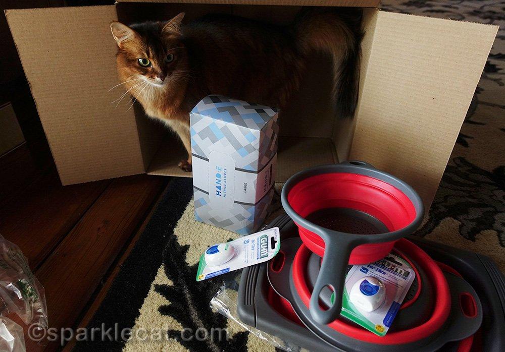 somali cat finds contents of Amazon Prime box boring