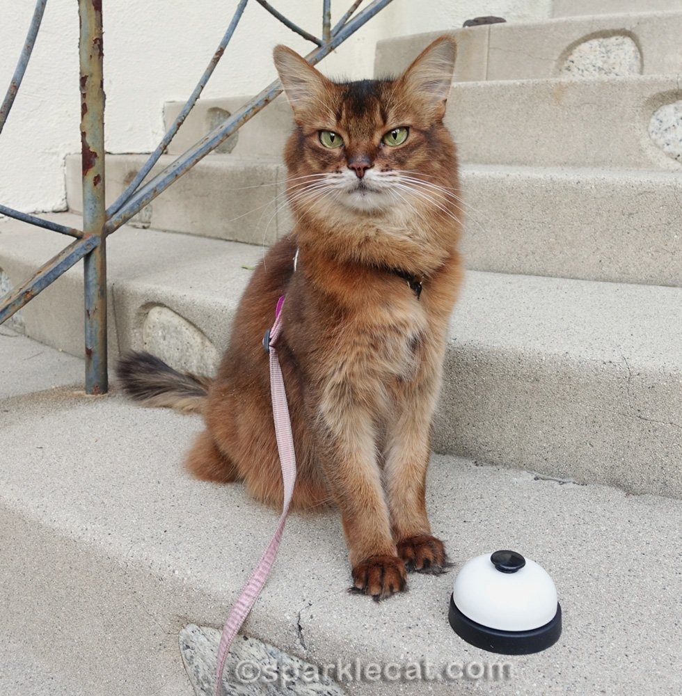 Summer has a quick outside training session, and practices some of her cat tricks.