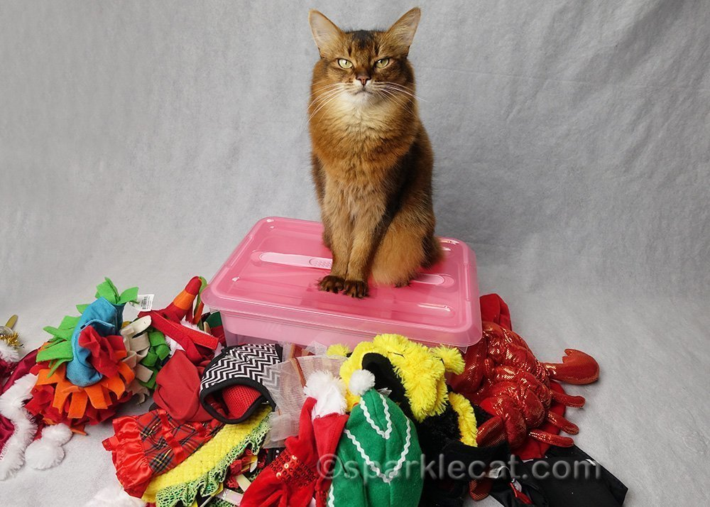 somali cat with wardrobe box, and cat costumes