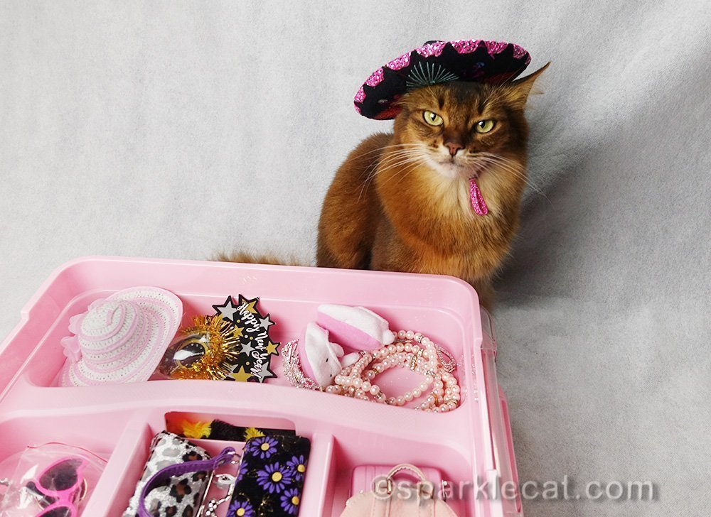 somali cat with accessory rack and wearing a sombrero