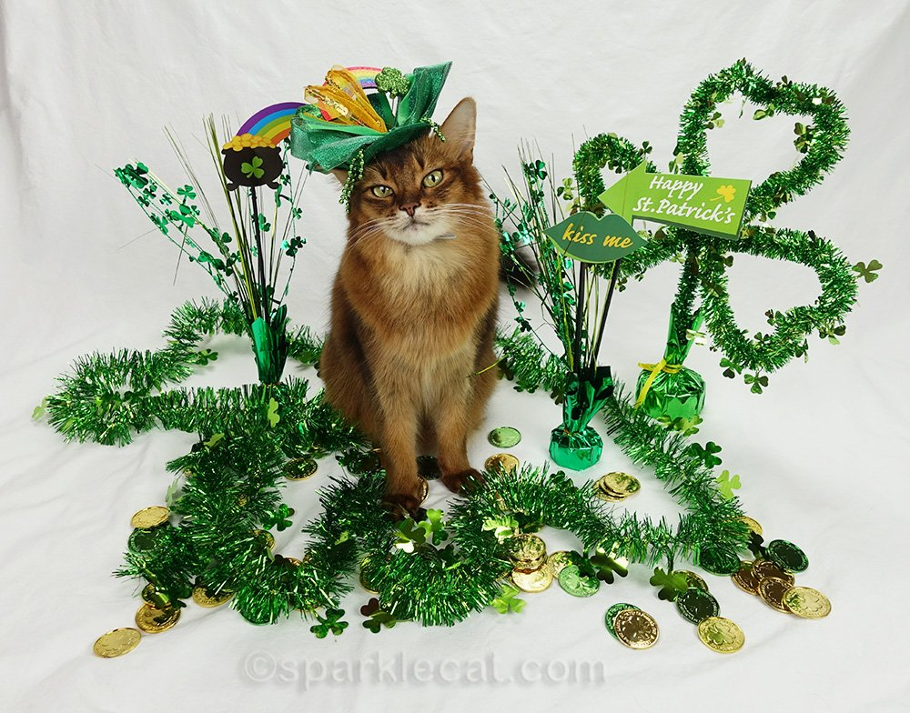 somali cat with St. Patrick's Day hat on St. Patrick's Day set