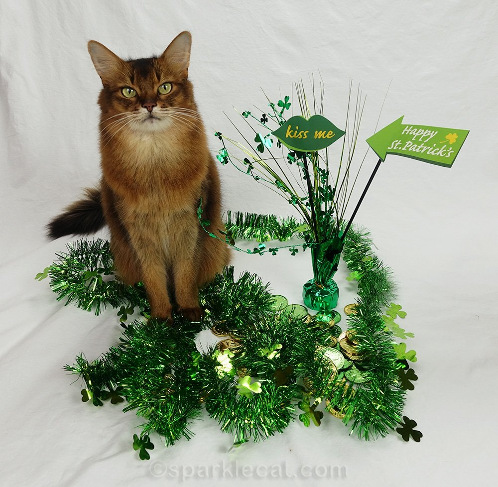 somali cat with smaller St. Patrick's day set