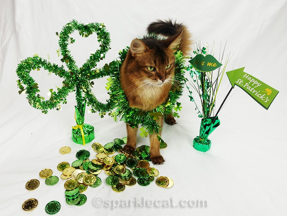 somali cat wrapped in St. Patrick's garland, on green set