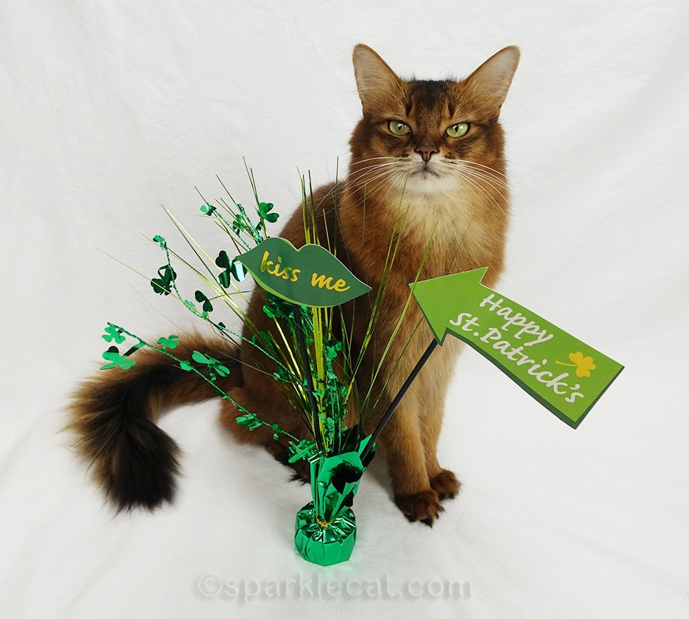 somali cat with one St. Patrick's prop