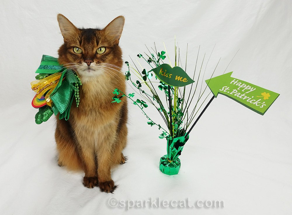 somali cat with St. Patrick's Day hat malfunction