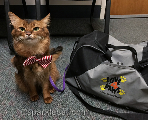 therapy cat ready to get a warm welcome back to one of her hospitals