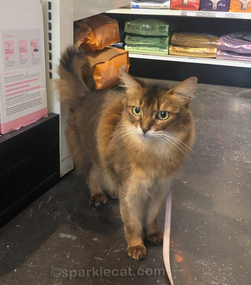 Summer has a fun time at the pet shop, browsing and making new friends.