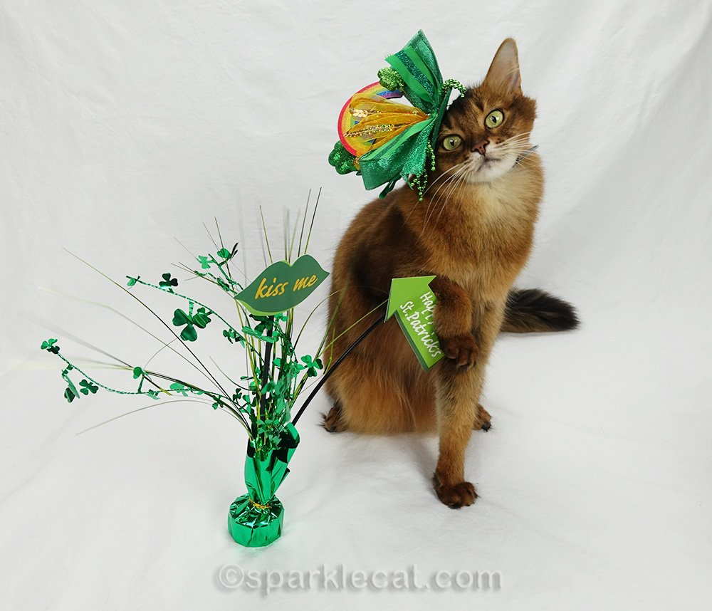 somali cat messing up St. Patrick's Day photo session
