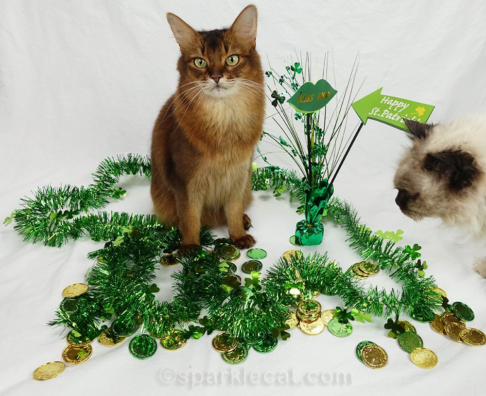 somali cat's St. Patrick's Day photo session being photobombed by rag doll cat