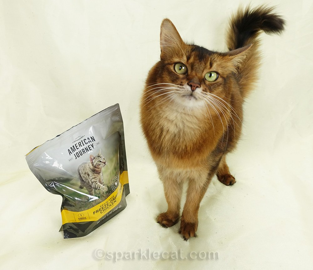somali cat on the set with her treats