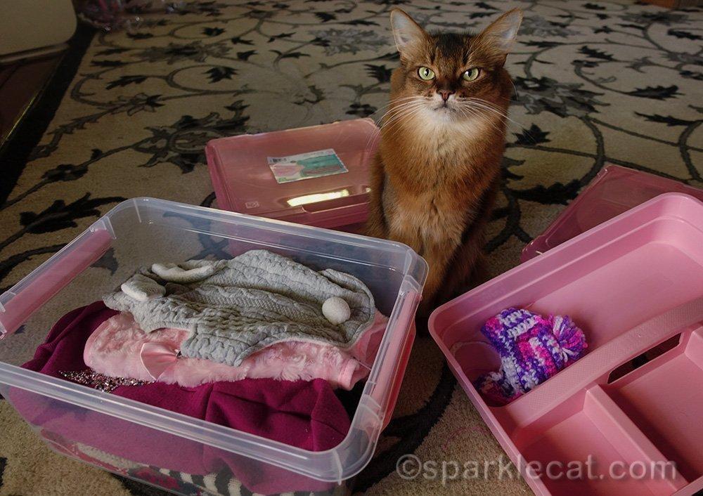 somali cat with wardrobe box of sweaters