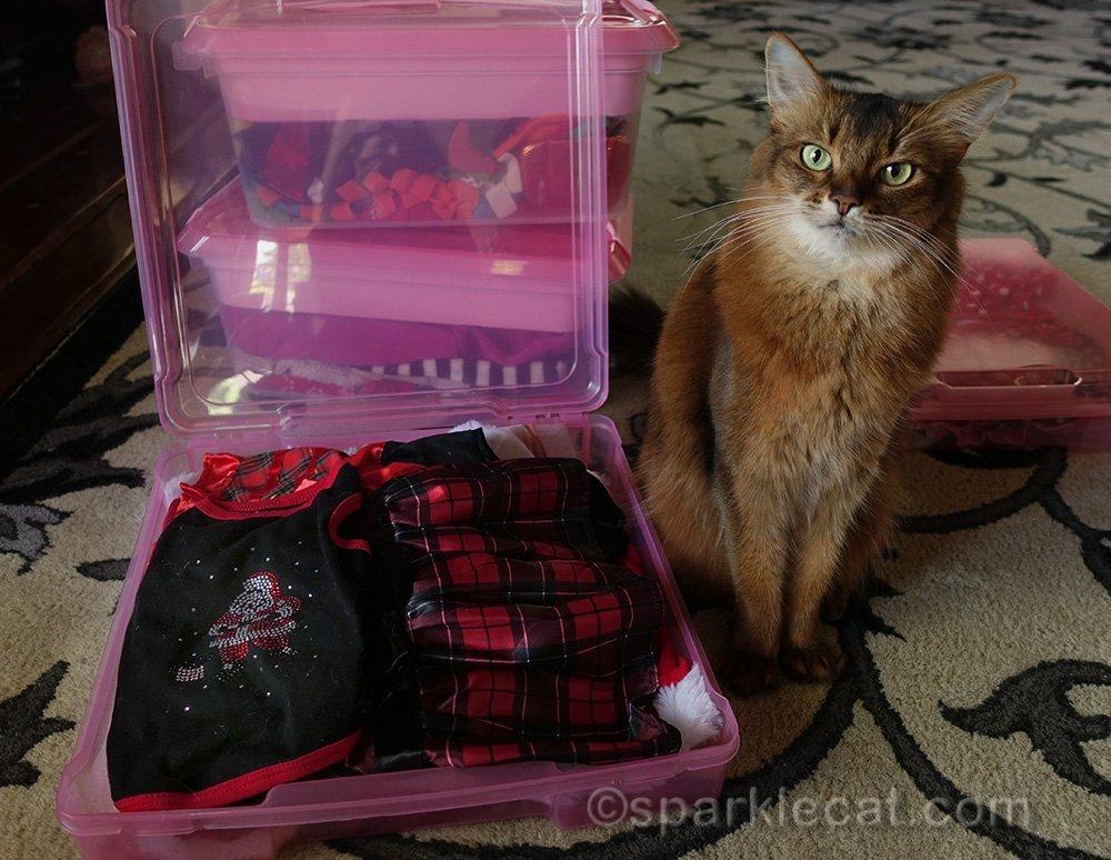 somali cat with her Christmas wardrobe