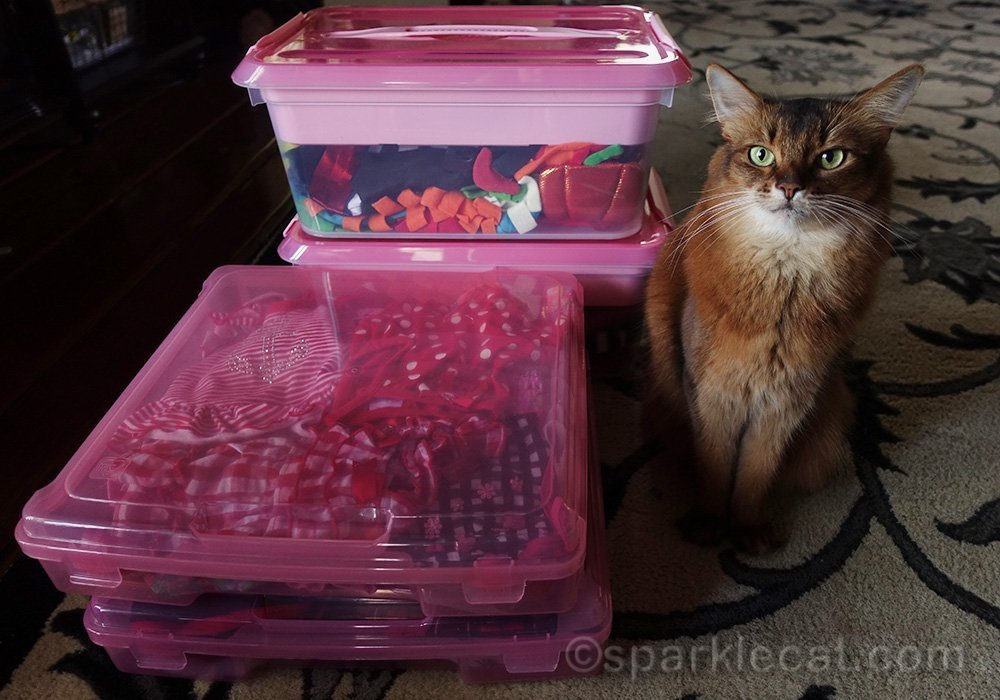 somali cat with her wardrobe boxes